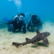 BSA Aware Shark Diver Specialty