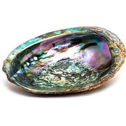 Abalone Diver Specialty