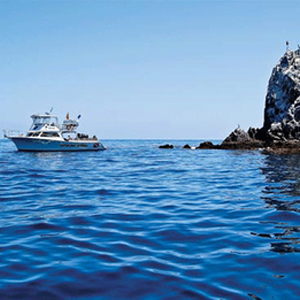 Deluxe Catalina Ocean Dives