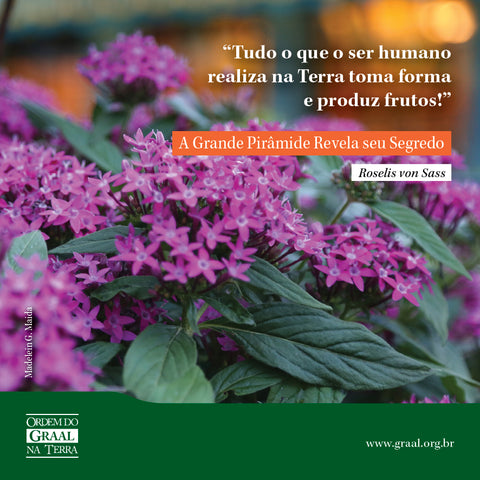 Flores pink