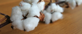 Next generation cotton you won't have to iron