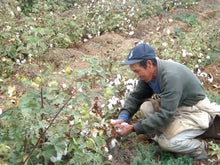 Fair trade organic cotton farmer picking cotton