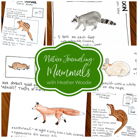 Nature Journaling: Mammals with Heather Woodie