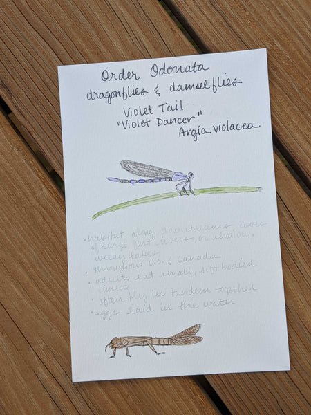 Nature Journaling: Insects with Heather Woodie