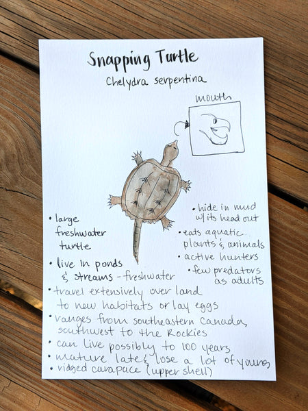 Nature Journaling: Amphibians & Reptiles with Heather Woodie