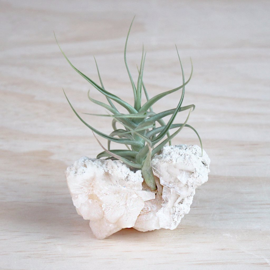 Crystal Air Plant Kit - Stilbite