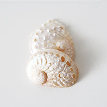 White Ablalone Shell 01