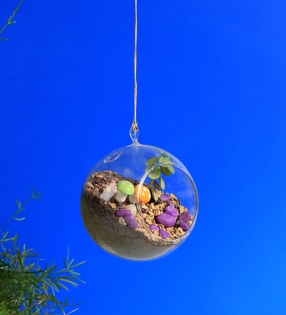 Hanging Glass Round Terrarium