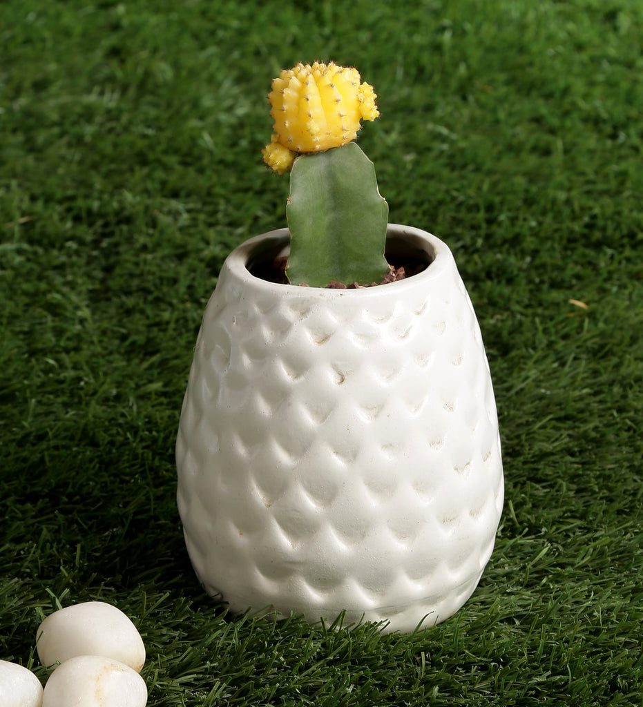 Ceramic White Dotted Egg Shaped Ceramic Table Top Pot
