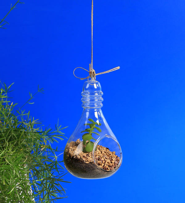 Hanging Glass Bulb Shape Terrarium