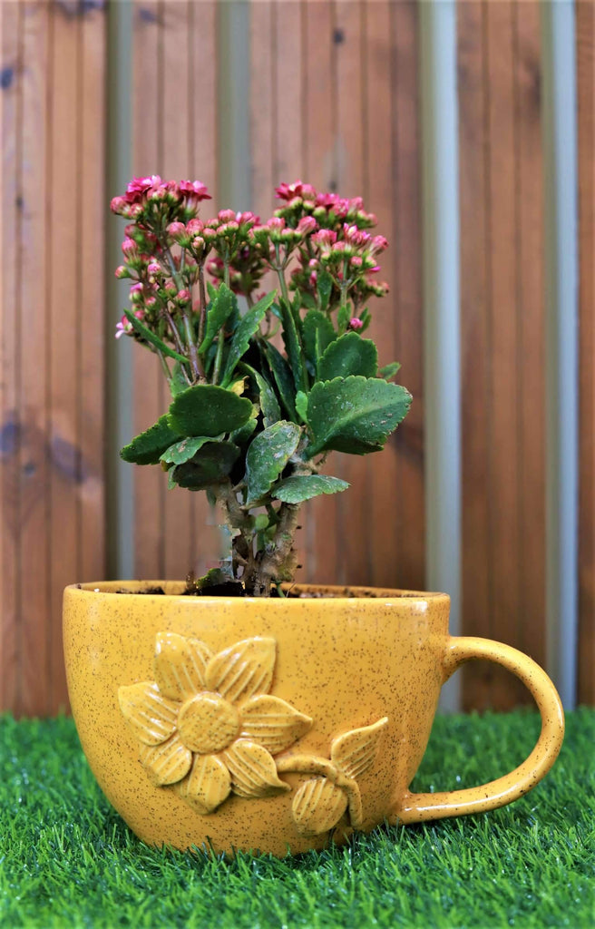 Yellow 13cm Flower Cup Shaped Ceramic Pot