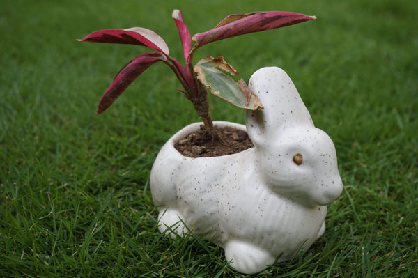 White Colored Hand Crafted Miniature Rabbit Planter