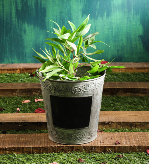 Grey Rustic Metal Bucket Planter Pot