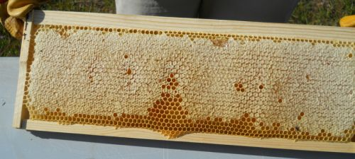 Honey Frames (Per 2.5kg Frame) (Fragile) Malee
