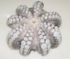 Local Headless Octopus 1 x 5kg (2 Days Pre Order)