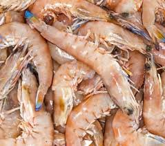 Prawn Raw Whole U15 King 5kg - Shark Bay (2 Days Pre Order) CARTON ONLY