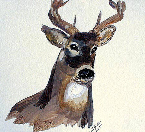 Deer - Greeting Card - GallaherGallery.com