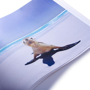 Esperance landscape photography book showing seal on a beach by photographer Dan Paris