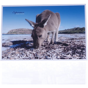 Card With Envelope - Lucky Bay Roo