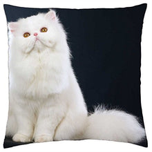 Louisa Maxine Fluffy White Persian Cat - Throw Pillow Cover Case (18