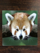 Red Panda One Piece Premium Ceramic Tile Coaster 4.25