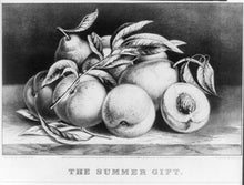 1870 PHOTO The summer gift