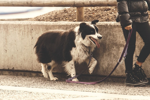 How to Stop Your Dog From Pulling On Their Leash