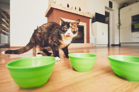 how often should i give my cat wet food
