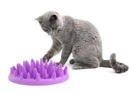 "Interactive Slow Bowl For Cats -  ""Spikey Bowl"""