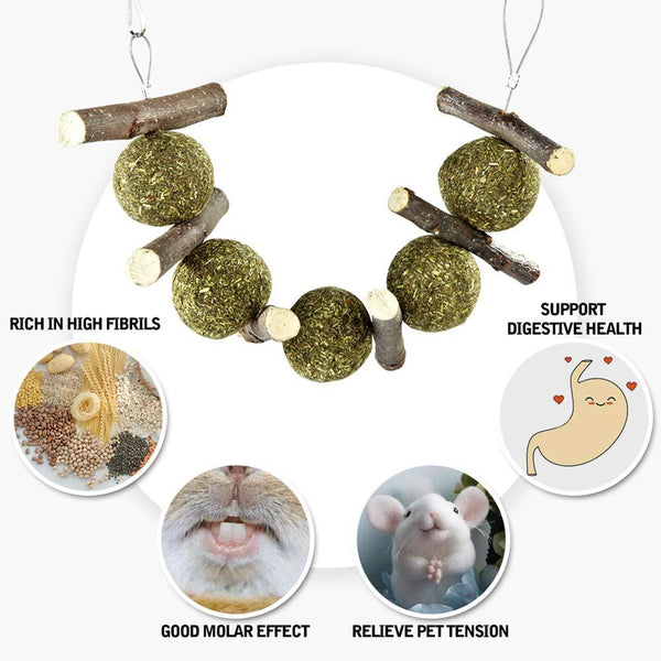 Chinchilla Safe Treats