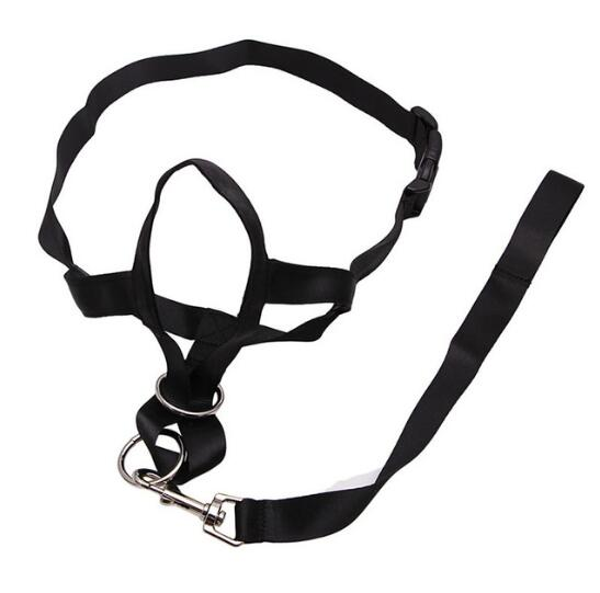 head halter with no pulling