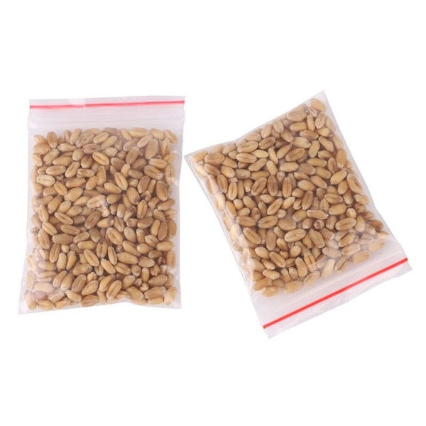 Cat Grass Seeds -100pcs/pack
