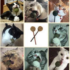 catnip lollipop with cats
