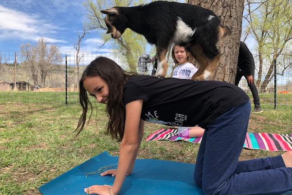 Seriously, You've Gotta Try Goat Yoga
