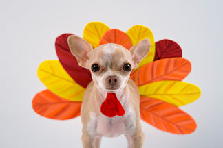 image for Thanksgiving Foods that are Healthy for Your Pet