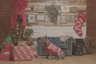 image for Holiday Gift Ideas for Your Pet