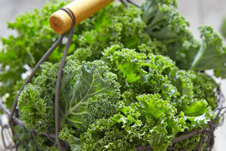 image for Healthy Ingredients for Your Pet: Kale