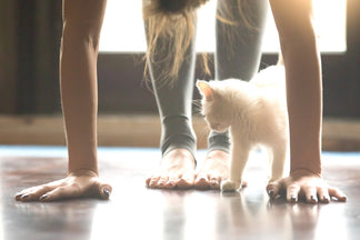 image for Petnet Exercise Tips for Your Pets