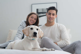 image for Can My Pet Catch the Flu?