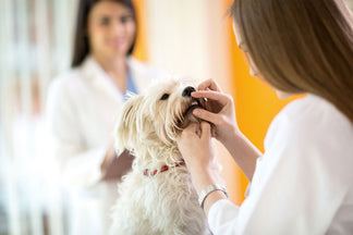 image for February is Pet Dental Health Month