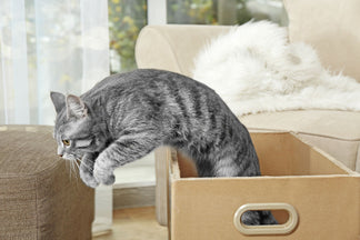 image for Petnet Tips for Exercising Your Cat