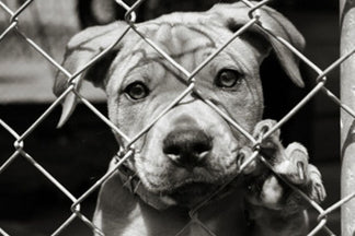 image for 12 Things About Adopting a Dog and Rescue Groups