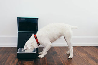 image for Petnet SmartFeeder for Parents of Healthy Pets