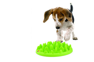 image for Benefits and Risks of Slow Feed Pet Bowls