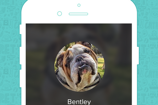 image for Pet of the Week: Bentley