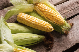 image for Not So Healthy Ingredients for Your Pet: Corn