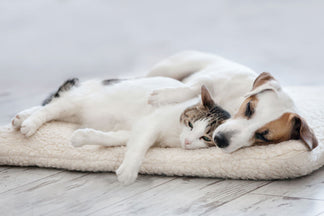 image for Choosing the Right Bed for Your Pet