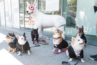 image for Petnet's Dog Day at Target Open House