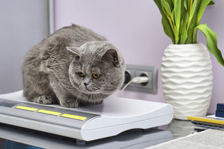 image National Pet Obesity Awareness Day