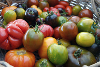 image for Healthy Ingredients for Your Pet: Tomatoes